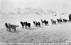 belgian shepherd vs husky siberian husky history u0026 training temperament