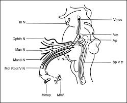 Motor Reflex Arc Correlation Between Electromyographic Reflex And Mr Imaging