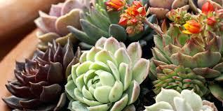 indoor plants that don t need sunlight plants that grow without sunlight 17 best plants to grow indoors
