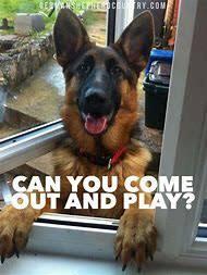 Funny German Shepherd Memes - best 25 ideas about funny german shepherd memes find what you ll love