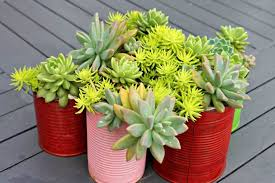15 best indoor succulent planting ideas that can beautify your