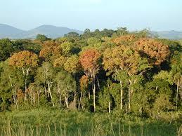 Gabon Map Nasa Tropical Forest In Gabon Africa