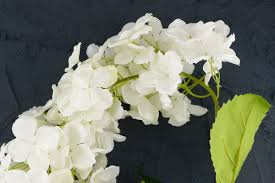 white hydrangea hanging hydrangea spray white