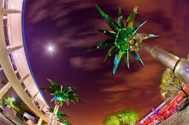 I Home Store by Tomorrowland Palm Trees Walt Disney World Photo Disney Tourist