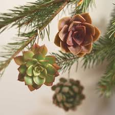 living succulent ornaments the green