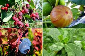 10 ornamental and edible garden plants