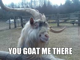 Funny Goat Memes - 49 very funniest goat meme images gifs graphics photos picsmine