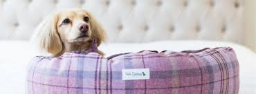 luxury pet store featuring designer dog clothes luxury dog beds