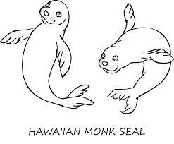 harp coloring page monk seal coloring page animals town animals color sheet