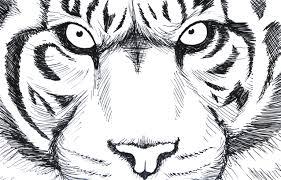 illustration homework iv u2013 animals u2013 ifwdesigns