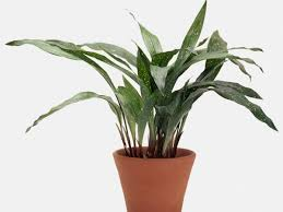 how to pick the perfect houseplants southern living