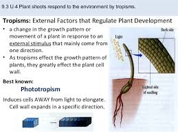 What Is Growth Movement Of A Plant Toward Light Called Ib Biology Topic Eight Plant Science