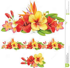 plumeria flower clip art clipart bay