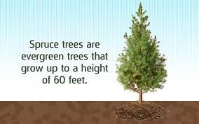deer resistant evergreen trees