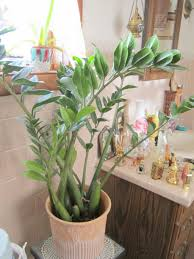 Home Decoration Plants by Awesome Plants For Bathrooms 47 For Your Home Interior Decoration