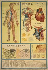 Human Body Anatomy Pics Chinese Public Health Posters Understanding Human Body