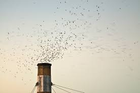 swift approach audubon