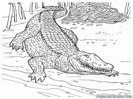 crocodile outline colouring pages coloring pages crocodiles