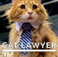 Lawyer Cat Meme - cat pics loading funny cats image 2885410 by yanito on favim com