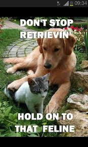 Golden Retriever Meme - golden retriever puppies home facebook