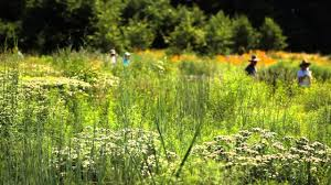 new york native plants native plant garden meadow youtube
