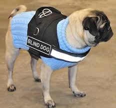 Pictures Of Blind Dogs Amazon Com Dt Works Harness Blind Dog Black White Medium