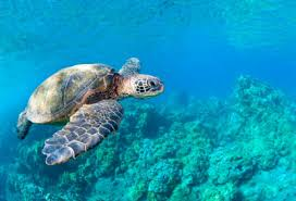 last minute travel to hawaii cheap hawaiian vacation packages
