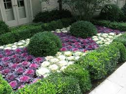 outdoor yard with boxwood and ornamental cabbage plants beautiful