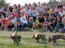 richardson adventure farm u0026 corn maze enjoy illinois