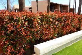 best shrubs for texas landscapes tlc landscapes llc
