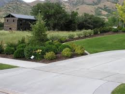 Fence Line Landscaping by Driveway And Property Line Landscape Privacy Fence Hedge