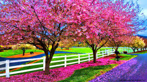 beautiful spring beautiful spring day wallpaper wallpapers gallery