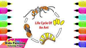 kids painting coloring pages how to draw and coloring life cycle