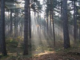 in the woods file crepuscular rays in the woods of kasterlee belgium jpg