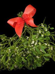 where to buy mistletoe buy large christmas mistletoe decorationas with berries buy