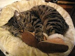 ugg boots on sale europe even cats ugg boots ugg discount cat cat