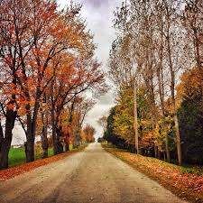 autumn road tree photo autumn thanksgiving decor landscape