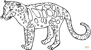 leopard images for kids coloring page free download