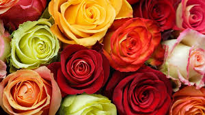 colorful roses colorful roses wallpaper flower wallpapers 50584