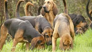 what are the different types of hound dogs reference com