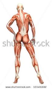 Woman Anatomy Video 84 Best Anatomy Reference Images On Pinterest Anatomy Reference