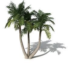 xfrog trees bangalow palm