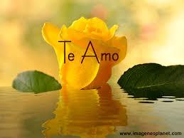 imagenes de amor con rosas animadas imagenes de rosas amarillas animadas con agua en movimiento