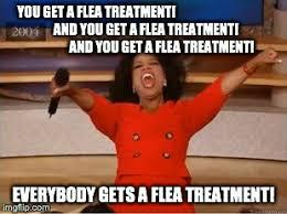 Alana Meme - flea memes for days