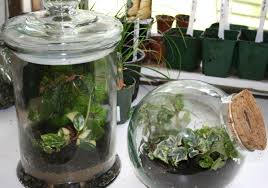 hla 6438 terrariums osu fact sheets