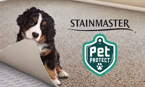 best carpets for pet owners mcswain carpets and floors