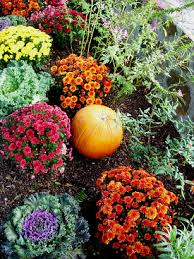 the best annual flowers for fall networx