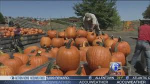 Local Pumpkin Farms In Nj by Summer Heat Forces Farmers To Outsource To Fill Pumpkin Patches