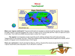 Dominant Plants Of The Tropical Rainforest - ağaçlar ve yağmur ormanları share www ozonpalet com tr ppt