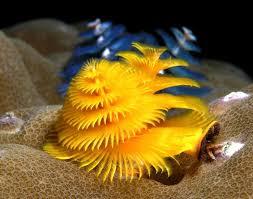200 best marine biology images on pinterest animals ocean life